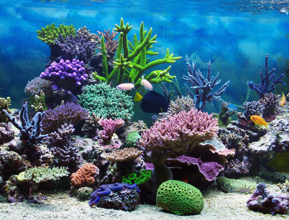 1000+ images about Coral Reef Photos on Pinterest | Coral ...