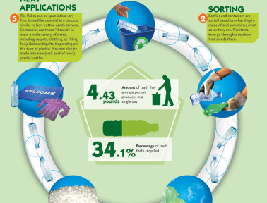 Infographic: How a Bottle Gets Recycled