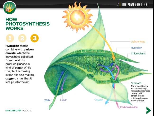 photosythesis works There's a lot of carbon in your body - in dna, proteins, carbohydrates, fats, and other key biological molecules how did that carbon get there drumroll photosynthesis.