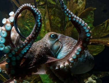 """News Wrap: """"Buffer Genes"""" Could Mask Genetic Diseases, Inky the Octopus Escapes, and more"""